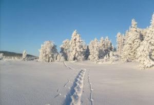 Erlebnis Schneeschuhlaufen @ Campus Schwarzsee